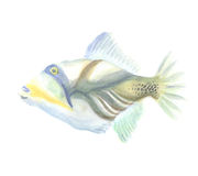 The Exotic Triggerfish Royalty Free Stock Photography