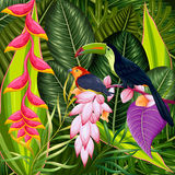 Exotic Tropical Background Stock Photos
