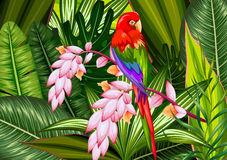 Exotic Tropical Background Stock Photography