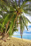 Exotic tropical beach. Royalty Free Stock Photography