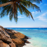Exotic tropical beach Royalty Free Stock Photography