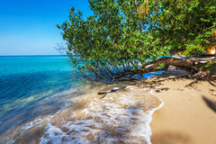 Exotic tropical beach. Royalty Free Stock Photos
