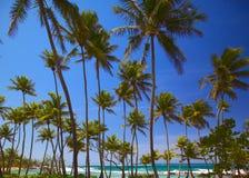 Exotic Tropical Beach Scene. A tropical beach with palm trees Stock Photos