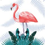 Exotic and tropical bird royalty free illustration