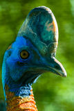 Exotic tropical birds in the Russian Park of birds. Royalty Free Stock Images