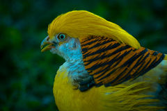 Exotic tropical birds in the Russian Park of birds. Stock Photos