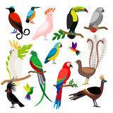 Exotic tropical birds set Royalty Free Stock Photos