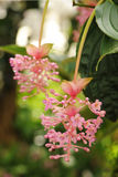 Exotic tropical blooming plants with pink flowers Stock Images