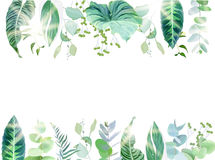 Exotic tropical border frame arranged from plants and palms. Green and emerald leaves, berry vector design set. Golden sun flares and luminous light. All Royalty Free Stock Images