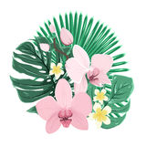 Exotic tropical bouquet orchid plumeria leaves Royalty Free Stock Photos