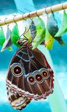 Exotic tropical butterfly. On the washed out background Royalty Free Stock Image
