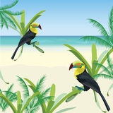 Exotic tropical card with toucan parrot birds Stock Image