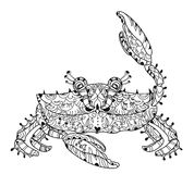 Exotic tropical crab Royalty Free Stock Images