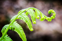 Exotic tropical ferns with shallow depth of field Stock Photography