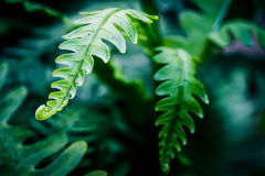 Exotic tropical ferns with shallow depth of field, vintage proce Stock Images