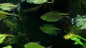 Exotic tropical fish. In the aquarium stock footage