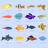 Exotic tropical fish different colors underwater ocean species aquatic nature flat isolated vector illustration Stock Photos