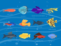 Exotic tropical fish different colors underwater ocean species aquatic nature flat isolated vector illustration Royalty Free Stock Image