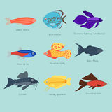 Exotic tropical fish different colors underwater ocean species aquatic nature flat isolated vector illustration Royalty Free Stock Photo