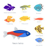 Exotic tropical fish different colors underwater ocean species aquatic nature flat isolated vector illustration Royalty Free Stock Photos
