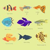 Exotic tropical fish different colors underwater ocean species aquatic nature flat isolated vector illustration Royalty Free Stock Images