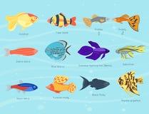 Exotic tropical fish different colors underwater ocean species aquatic nature flat  vector illustration. Decorative wildlife cartoon fauna aquarium water Stock Photos