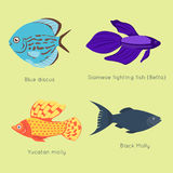 Exotic tropical fish different colors underwater ocean species aquatic nature flat  vector illustration Royalty Free Stock Images