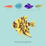 Exotic tropical fish different colors underwater ocean species aquatic nature flat  vector illustration Stock Photo
