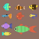 Exotic tropical fish race different breed colors underwater ocean species aquatic strain nature flat vector illustration Stock Image