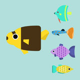 Exotic tropical fish race different breed colors underwater ocean species aquatic strain nature flat vector illustration Stock Photography