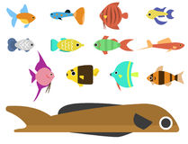 Exotic tropical fish race different breed colors underwater ocean species aquatic strain nature flat vector illustration Stock Photos