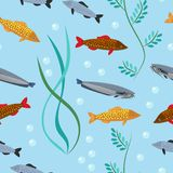 Exotic tropical fish underwater ocean or aquarium aquatic nature seamless pattern background vector. Exotic tropical fish race different breed colors underwater Stock Photos