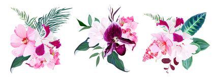 Free Exotic Tropical Floral Bouquets Of Hibiscus, Medinilla, Paphiope Royalty Free Stock Images - 110733509