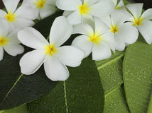 Exotic tropical flowers. White colour Royalty Free Stock Images