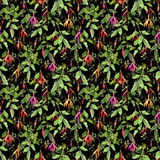 Exotic tropical flowers on black background. Seamless floral pattern. Water color vector illustration
