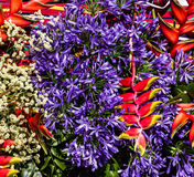 Exotic tropical flowers in Madeira, Portugal Stock Image