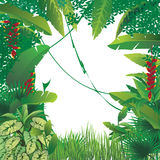 Exotic tropical forest. Vector illustration of exotic tropical forest, blank spot on the middle Royalty Free Stock Photo