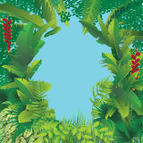 Exotic tropical forest Royalty Free Stock Image