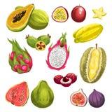 Exotic tropical fresh fruit watercolor set design Royalty Free Stock Photos