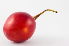 Exotic tropical fruit called tree tomato Solanum Betaceum. On white background Royalty Free Stock Photos