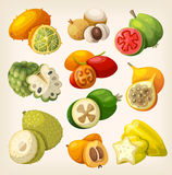Exotic Tropical Fruit. Stock Photos