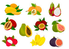 Exotic tropical fruit isolated icon set. Exotic fruit isolated icon set with tropical mango, papaya, carambola, passion fruit, lychee, dragon fruit, fig, guava Royalty Free Stock Photo