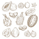 Exotic tropical fruit isolated sketch set. Exotic tropical fruit sketch set. Papaya, carambola, feijoa, passion fruit, guava, dragon fruit, lychee, durian and Stock Photos