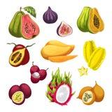 Exotic and tropical fruit watercolor illustration. Exotic and tropical fruit vector watercolor illustration. Fresh mango, fig and papaya, guava, carambola and Stock Photo