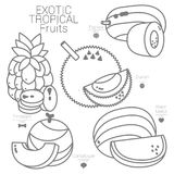 EXOTIC TROPICAL FRUITS BW Royalty Free Stock Images