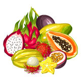 Exotic tropical fruits collection. Illustration of asian plants Stock Image