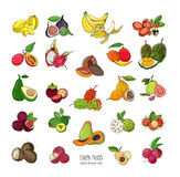 Exotic tropical fruits hand drawn set. Collection of whole fruit and cutaway. Avocado, Ackee, Banana, Guava, Dogwood Stock Photos