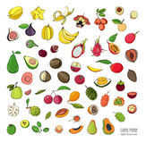 Exotic tropical fruits hand drawn set. Collection of whole fruit and cutaway. Avocado, Ackee, Banana, Guava, Dogwood Royalty Free Stock Photo