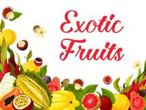 Vector exotic fresh tropical fruits poster. Exotic tropical fruits poster of guava, figs or orange and lichee, carambola starfruit or maracuya passion fruit Stock Photography