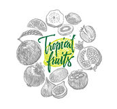 Exotic Tropical Fruits Sketch Elements Composition Royalty Free Stock Photo